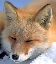 foxy.PNG